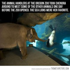 this makes my heart smile...I wish I could have been there to see her reaction to all the other animals. She looks absolutely enchanted by the sea lion.