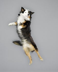 Jumping Dogs Series :)