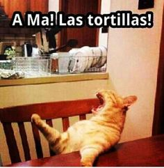"""My Poyito for damn sure!! """"A'ma the tortillas?!! You can always make them when I come over you know...!!"""" So cabron muy ching.....lolMexican momma boy's be like : Ama!!!!"""