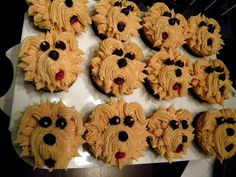 Yorkie Cupcakes, Just missing a bow :D    We shall get these for Winston on his birthday...Winston is my Granddog! :)
