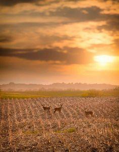 Rural Landscape Of Northeast Iowa By Igor Kovalenko Via