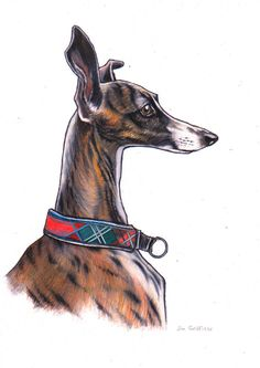 Original Whippet sighthound art colour pencil by JimGriffithsArt