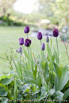 Zahrada Flow