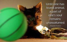 Definitely! Happy Monday everyone! #Yorkie #Quotes http://ift.tt/1MZLWNI