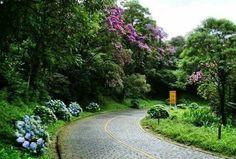 Estrada da Graciosa  - Paraná  - Brasil