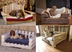 Upcycle a Pallet into a fabulous Pet Bed for your furbaby. We've included a helpful video tutorial plus lots of different versions for you to pick from. You will love the Doggy Bunkbeds too. This post is a pet lovers paradise!