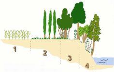 Préserver la rivière et ses berges grâce à la ripisylve. 1 - Zone de culture - 2 -Zone tampon - 3 - Zone intermédiaire - 4 - Ripisylve