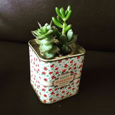 Happy with Love Just for You - latinha garimpada #oitominhocas  #plantas #succulentlove #succulents #suculovers #suculenta #suculentas #green #lata