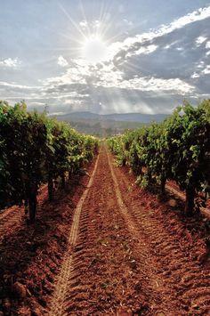 Pathway thru the grape vines