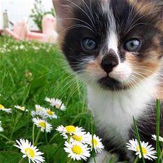 Sweet Darling Kitty!!!!!!❤️❤️❤️❤️❤️❤️❤️❤️❤️❤️