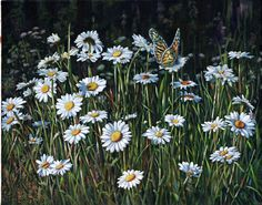 Acrylic Painting: A Daisy Afternoon by Shirley Reade paintings of daisies and butterfly
