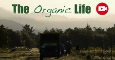 Due to the uphill challenges of economic viability for organic farms, young organic farmers are considered endangered species, with numbers dropping each year. http://articles.mercola.com/sites/articles/archive/2015/07/11/organic-life-sustainable-farming.aspx