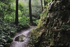 Zřícenina mlýna, skály a vyhlídka na Kutnou Horu Trunks, Plants, Drift Wood, Tree Trunks, Plant, Planets