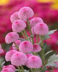 Image uploaded by María José. Find images and videos about flores, beauty and nature on We Heart It - the app to get lost in what you love. Beautiful Flowers Garden, Flowers Nature, Exotic Flowers, Amazing Flowers, My Flower, Pretty Flowers, Beautiful Gardens, Pink Flowers, Bloom