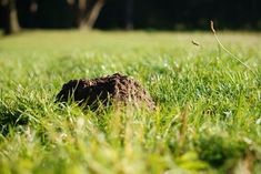 Turf Wars-The Battle For Your Yard - Landscaping Product News