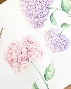 Watercolour floral illustration - hydrangea watercolour painting for wedding invitations Watercolor Wedding Invitations, Wedding Stationery, Watercolour Painting, Floral Watercolor, Hydrangea Flower, Flowers, Floral Illustrations, Hand Painted, Wedding Ideas