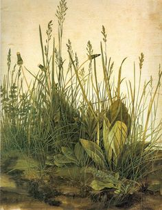 watercolor by old master Albrecht Durer