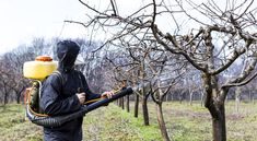 Transplant shock side effects fluctuate a bit, however often influence it to give the impression that your recently planted tree is dying. If you are looking for tree services, then contact Axe tree Pros.