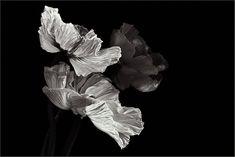 Фотограф Кристин Эллджер (Christine Ellger). Цветы. . Обсуждение на LiveInternet - Российский Сервис Онлайн-Дневников