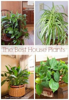 You can't kill these common house plants! The philodendron, boston fern, english ivy and the spider plant are easy care house plants, perfect for beginner. Outdoor Plants, Garden Plants, Outdoor Gardens, Roof Plants, Plants Indoor, Container Gardening, Gardening Tips, Indoor Gardening, Common House Plants