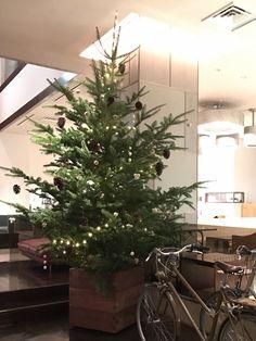HOTEL CLASKA X'MAS TREE  2016 #flower #shop #works #matilda #中目黒 Matilda, Christmas Tree, Holiday Decor, Flowers, Shop, Plants, Home Decor, Teal Christmas Tree, Decoration Home