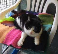 ***CAT FOUND IN CORNWALL*** Domestic short haired black and white female found in Callington. No collar or microchip. Please call 01752 331602 if you have lost a cat matching this description.