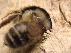 Bee houses - YouTube