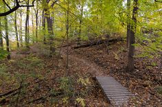"""Hiking trails in Toronto exemplify the city's quaint, and somewhat hyperbolic, slogan, """"A City within a Park."""" With the federal government allottin. Go Hiking, Hiking Trails, Fall Season Pictures, Ontario, The Rouge, Get Outside, Day Trips, The Great Outdoors, National Parks"""