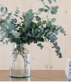 Eukalyptus in einer klaren Vase. Eukalyptus in einer klaren Vase. Eukalyptus in einer klaren Vase. Vases Decor, Plant Decor, Dried Eucalyptus, Plantas Indoor, Grand Vase En Verre, Decoration Plante, Clear Vases, Garden Wedding Decorations, Minimalist Decor