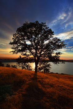 ✯ Hensley Tree - Madera, CA