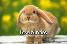 """I once had a small farm back in TN., & had a few bunnies. My fav. was my flop earred bunny who I named """"Flopsy"""". ;o)"""