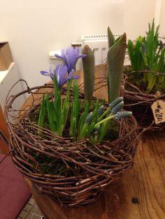 Lagde 5 slike sammenplantninger av vårens blomsterløker