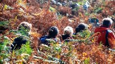 Connemara Walks - guided heritage walks with archaeologist Michael Gibbons - Visit Alcock & Brown Landing site, Marconi Station, megalithic sites & more. Secluded Beach, Connemara, Campsite, Family Activities, Ecology, Habitats, Walks, Trek, Ireland