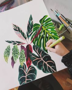 "Josefina Jiménez on Instagram: ""Lunes trabajando este pattern de plantitas de interior 🌿, qué me han dicho 😍! . . . . . . #ilustracion #illustration #illustrationnow…"" Floral Prints, Paintings, Instagram, Illustration, Pattern, Indoor Plants, Mondays, Interiors, Art"