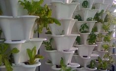 Urban farming: how far can we go in feeding cities? | Tom Levitt ...