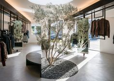 Dan Brunn plants olive tree in RTA Melrose boutique in Los Angeles