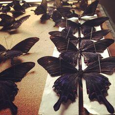 Butterflies...not in my stomach