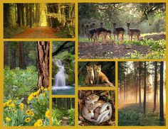 xx Dream Collage, Beautiful Collage, Forest Flowers, My Dream, Mood Boards, Collages, Seasons, Autumn, Fall