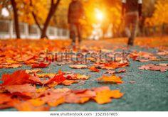 Autumn fallen leaves on the path - Stock Photo , Autumn Leaves, Fallen Leaves, Pictures For Sale, Creative Resume Templates, Birds In Flight, Paths, Flora, Stock Photos, Landscape