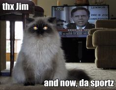 Newscaster LOL Cat