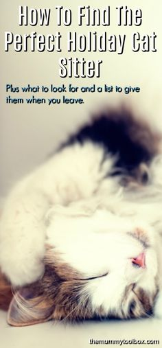 How To Choose The Perfect Holiday Cat Sitter - The Mummy Toolbox Information About Cats, Cats And Cucumbers, Cat Sitter, Pet Travel, Travel Tips, Cute Cats And Kittens, Pet Accessories, Pet Care, Funny Cats