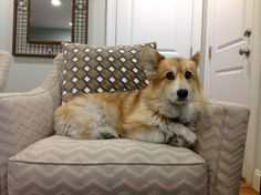 I look wary as I know my time here is limited on this, the forbidden chair.