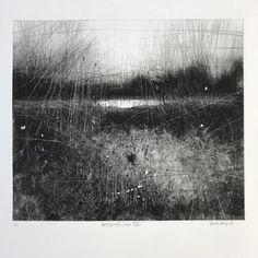 Wetlands Sun VII