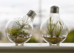 Brighten up your desk or counter with some of these brilliant Light Bulb Terrariums. Made from recycled light bulbs, each tiny terrarium includes Mini Terrarium, Light Bulb Terrarium, Glass Terrarium, Recycled Light Bulbs, Deco Nature, Pot Plante, Old Lights, Terraria, Planting Bulbs