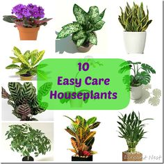 10 Easy Care Houseplants And Tips To For Them