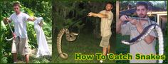 Snake Removal – How to Get Rid of Snakes – Snake Trap, Repellent, Control Services, wildlife removal nashville. – Trinidad And Tobago Finance Brown Water Snake, Harmless Snakes, Snake Removal, Keep Snakes Away, How To Get Rid, How To Remove, Kinds Of Snakes, Rat Snake, Neptune Beach