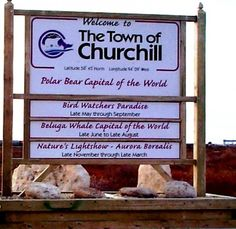 Churchill -Manitoba, Canada is famous for summer activities involving the exciting beluga whales, thrills alongside the river, snorkeling, kayaking, boat tour, tundra, historic sites & dog sled rides