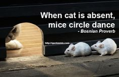 When cat is absent, mice circle dance - Bosnian Proverb. For more Bosnian Proverbs http://quotesmin.com/Bosnian-proverb.php