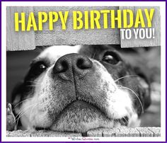 Funny Dog Birthday Meme: Happy birthday to you