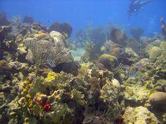 Underwater scene - scuba diving